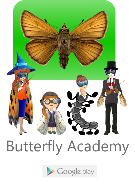 Butterfly academy, Goodle play
